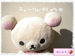 ちこちゃんのチューリップ観察日記★8★にょきっ-1