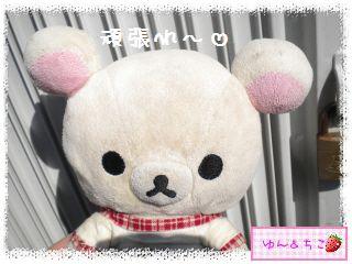 ちこちゃんのチューリップ観察日記★9★にょきにょき~-8