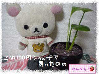 ちこちゃんの観葉植物日記1-2