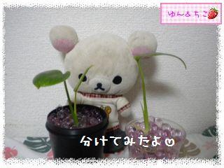 ちこちゃんの観葉植物日記1-4