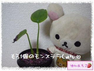 ちこちゃんの観葉植物日記1-6