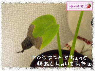 ちこちゃんの観葉植物日記1-7