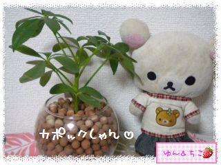 ちこちゃんの観葉植物日記1-9
