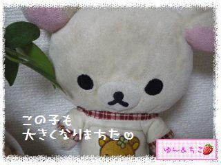 ちこちゃんの観葉植物日記1-10