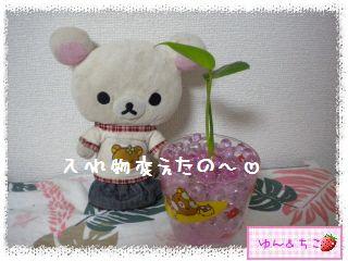 ちこちゃんの観葉植物観察日記2-2