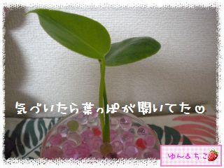 ちこちゃんの観葉植物観察日記2-4