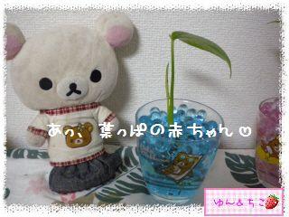 ちこちゃんの観葉植物観察日記2-5