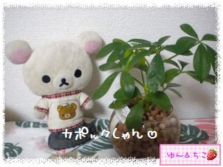 ちこちゃんの観葉植物観察日記2-7