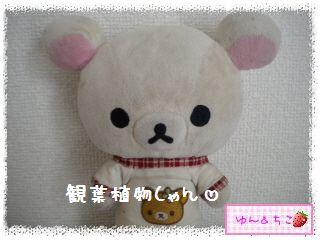 ちこちゃんの観葉植物観察日記★3★-1