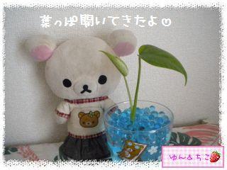 ちこちゃんの観葉植物観察日記★3★-2