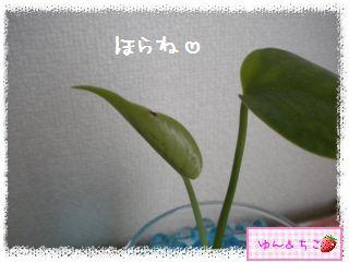 ちこちゃんの観葉植物観察日記★3★-3
