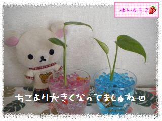 ちこちゃんの観葉植物観察日記★3★-4