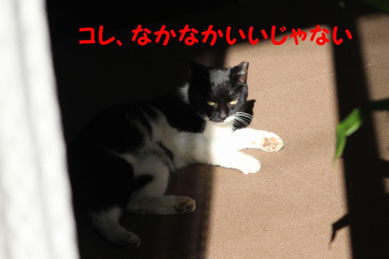 yuta20121111-4.jpg