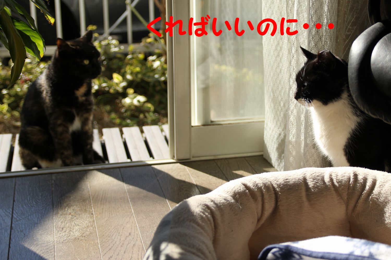 yuta20130126-4.jpg