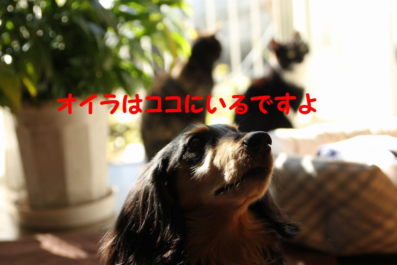 yuta20130126-8.jpg