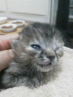 低体温仔猫