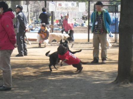 小金井公園-6