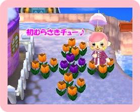 初紫チュー