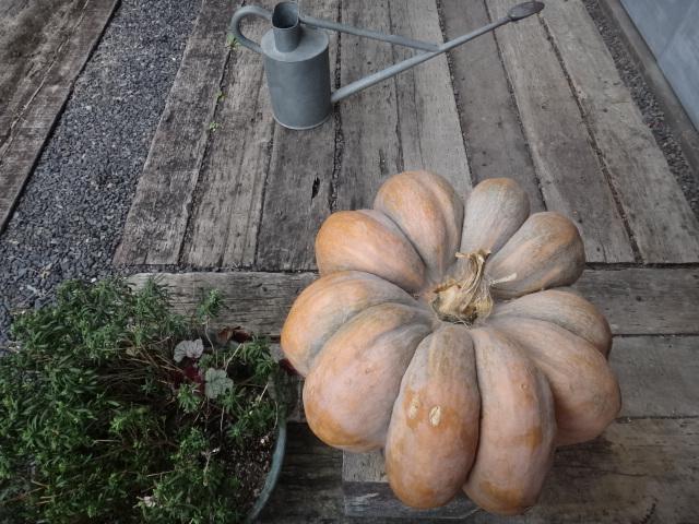 イギリスかぼちゃ