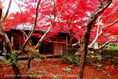 2012年 秋・京都