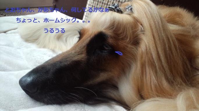 20120619214758a96.jpg