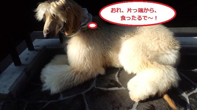 20121108151218e8a.jpg