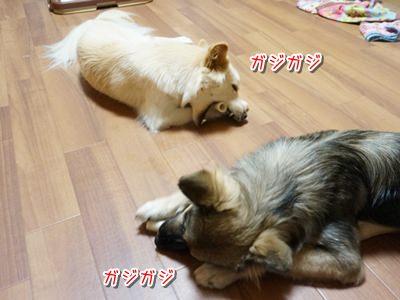 20141115_5.jpg