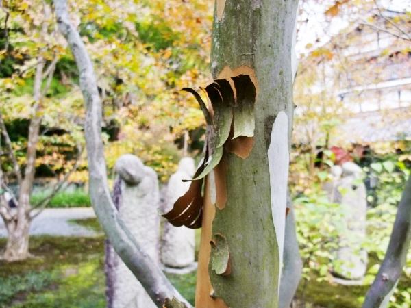 沙羅の木の皮