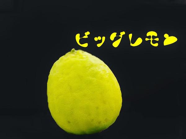 ビッグレモン