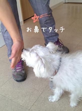 fc2blog_20130417114721d83.jpg