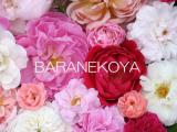 BARANEKOYA