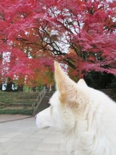 紅葉の神社 (5)