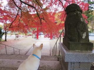 紅葉の神社 (6)