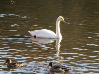 白鳥さんと (1)