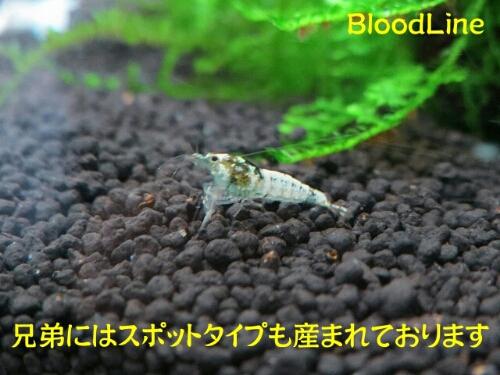 PhotoHenshu_20120913201931.jpg