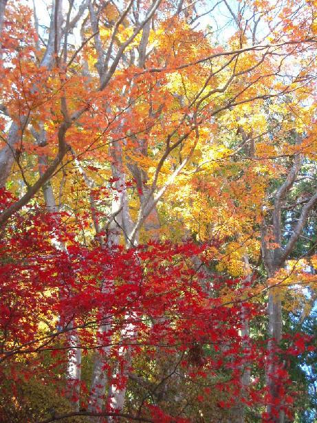 綺麗な高尾山の紅葉