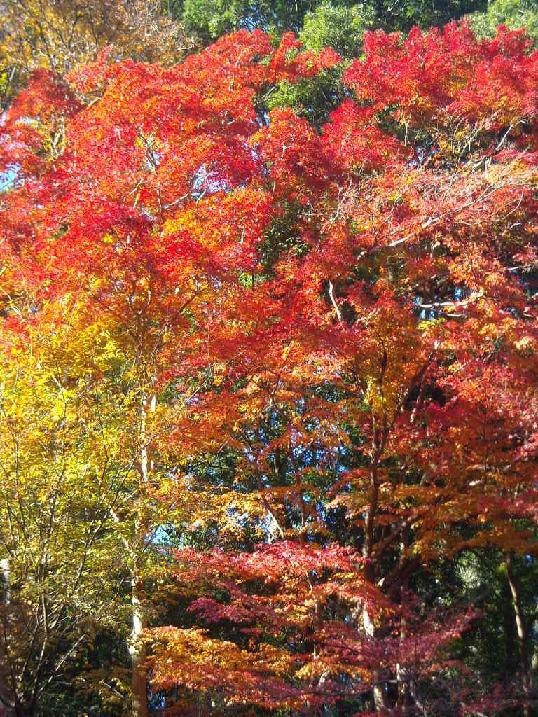 高尾山の紅葉 綺麗