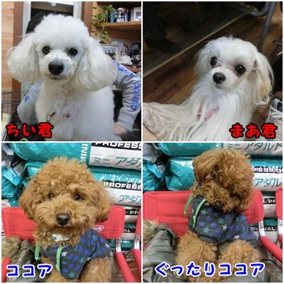 20131229093730e4f.jpg