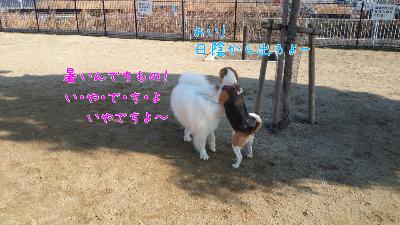 edit_2014-01-23_12-51-31-839.jpg