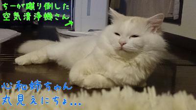edit_2014-01-24_12-42-23-085.jpg
