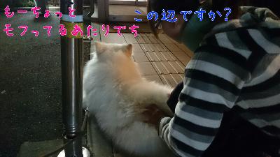 edit_2014-01-29_20-56-19-105.jpg