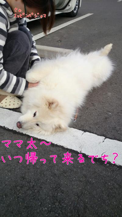 edit_2014-02-02_15-09-53-185.jpg