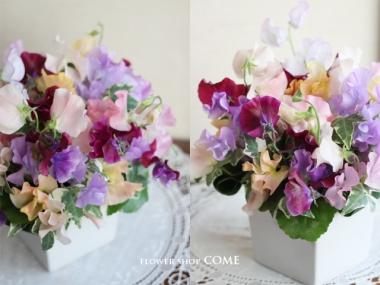 成人祝いの花「スイートピー(花言葉は門出)のアレンジメント」
