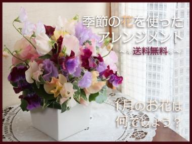 成人式のお祝いの花「スイートピーのアレンジメント」