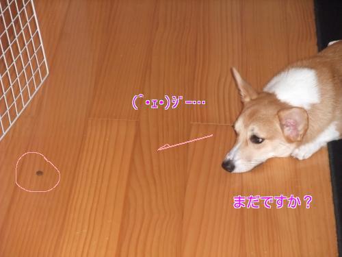 201209222335302fb.jpg