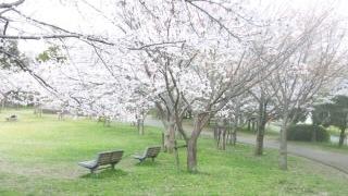 春のご招待。