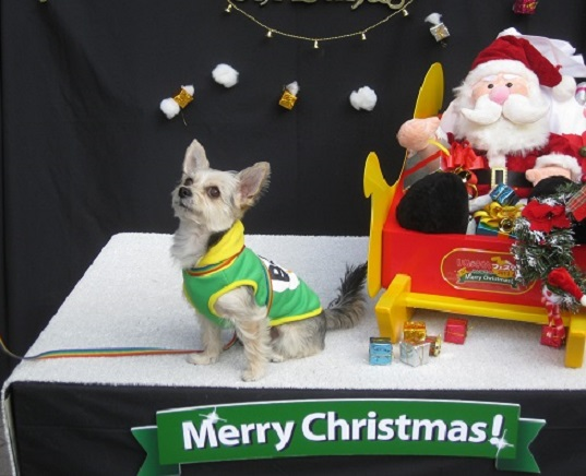10メリークリスマスS 1207