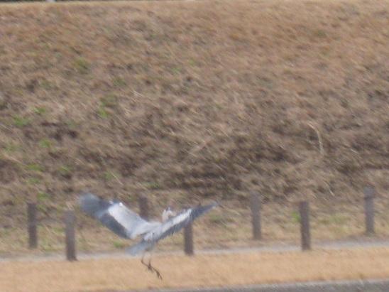 11鷺 飛ぶ 1226