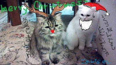 DSC_christmas2(2).jpg