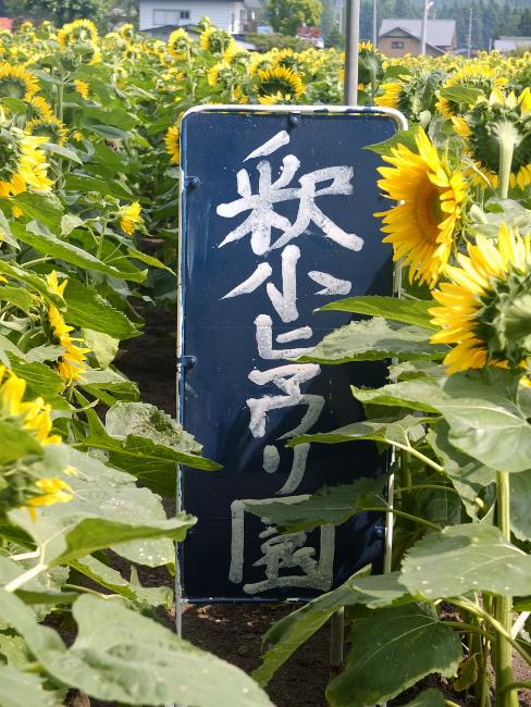 DSCF0080_1.jpg